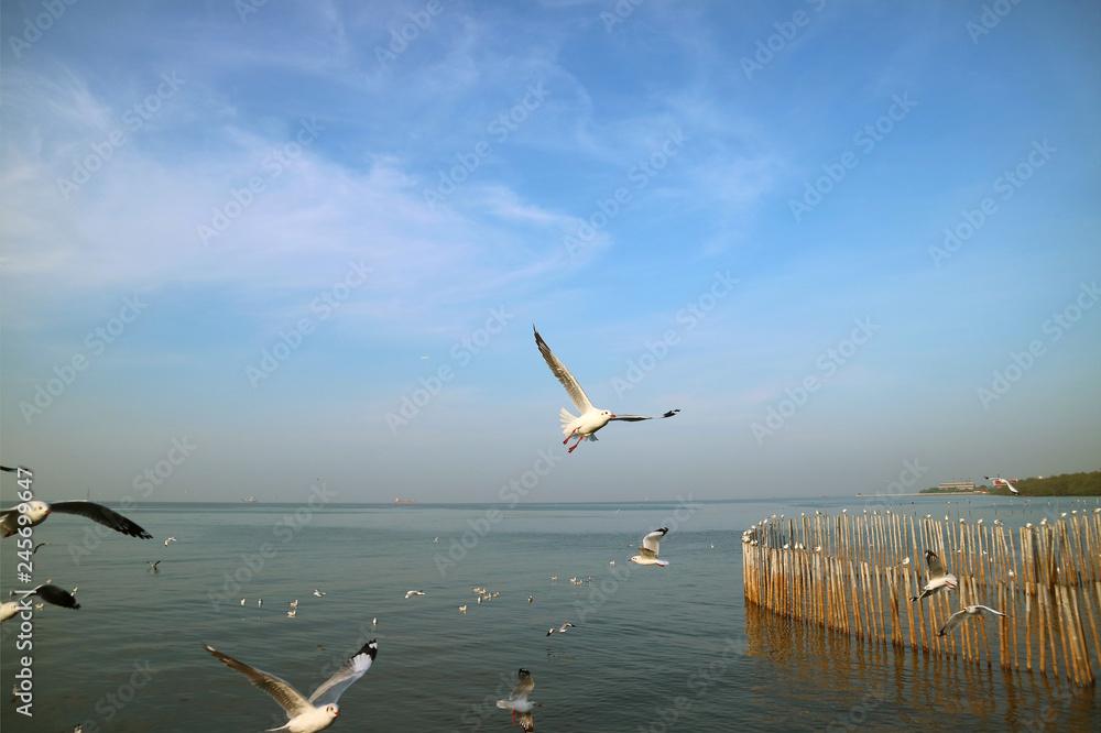 Many of Seagulls Flying over the Sea to Seek for Food, Bang Pu Beach, Samutprakarn, Thailand