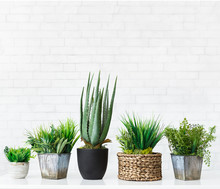 Various Cactus And Succulent Plants In Pots, Free Space