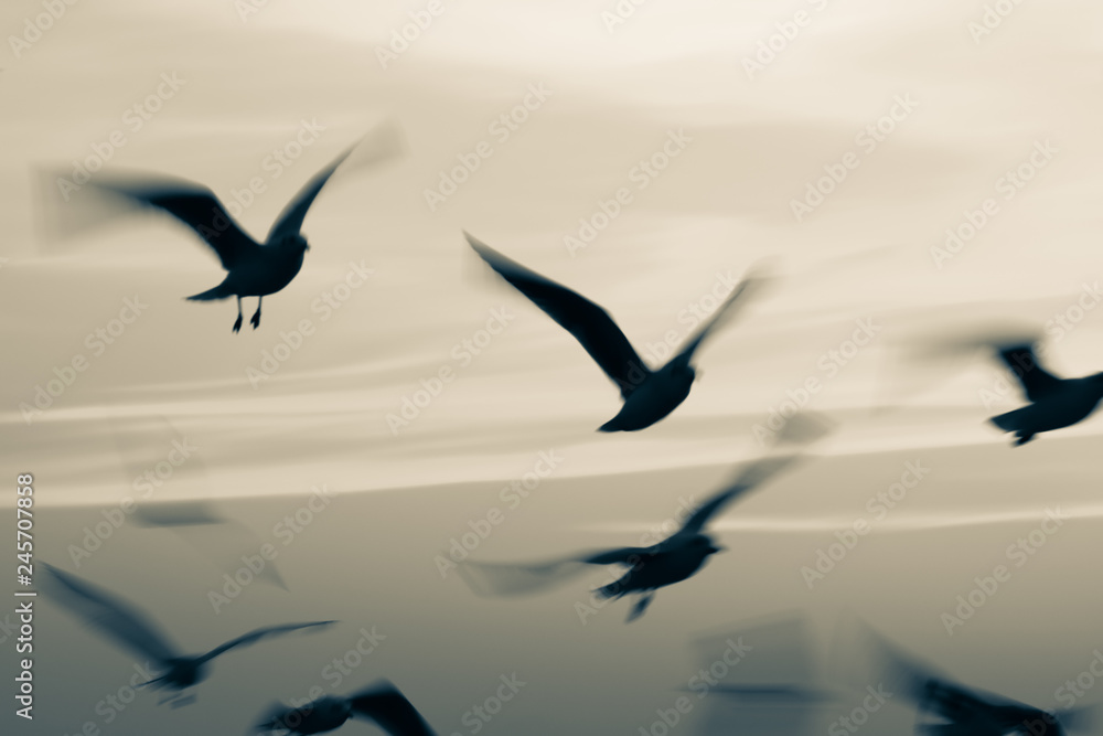 Seagulls flying in sunset sky,Abstract motion blur background with low speed shutter and monochrome image