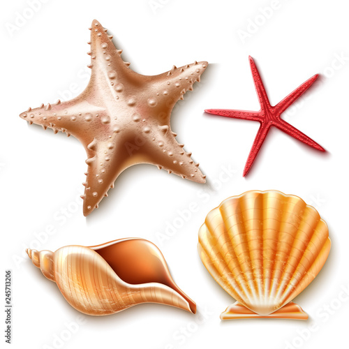 Photo Vector realistic 3d sea shell, starfish set