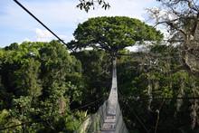 Jungle Canopy In Peruvian Amazon