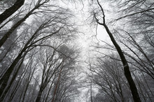 Leafless Forest Tree Canopy