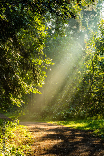 Okleiny na drzwi - Lasy - Drzewa  beautiful-sunny-morning-in-the-forest