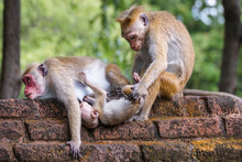 A Wild Monkey Family In Nature