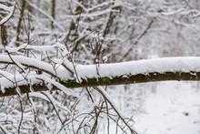 Grenar Med Nyfallen Snö