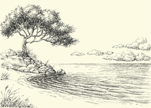 Olive Tree On Sea Shore Vector Drawing