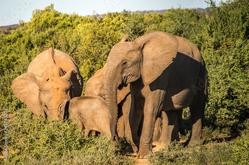 Canvas Prints Elephant Potrait of an elephant in south africa