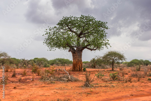 Lone baobab in Ngutuni Park. Kenya safari Canvas-taulu