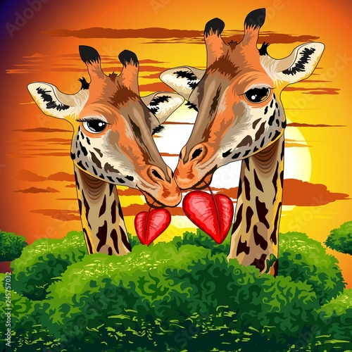 Fotobehang Draw Giraffes in Love in Wild African Savanna Valentine s Day Vector Illustration