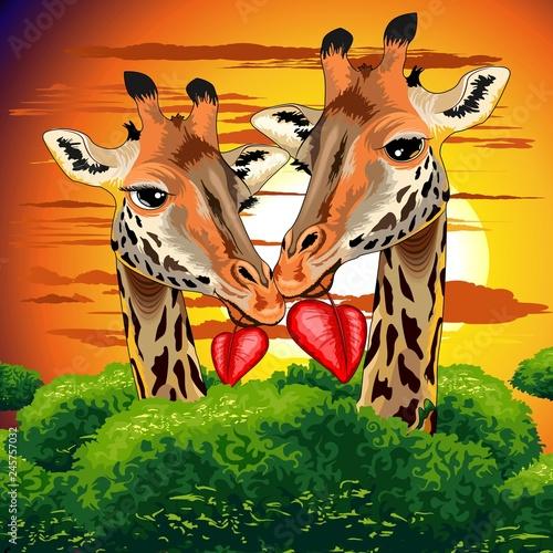 Tuinposter Draw Giraffes in Love in Wild African Savanna Valentine s Day Vector Illustration