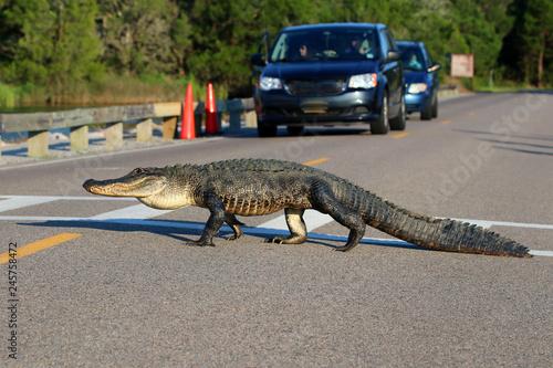 Photo South Carolina wildlife nature background