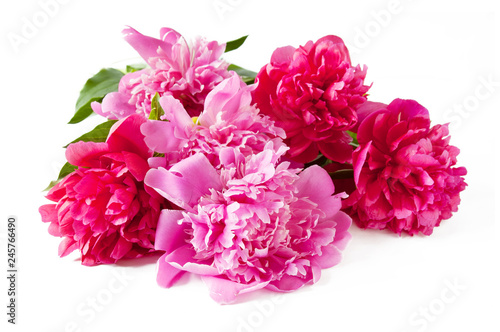 Foto op Canvas Hydrangea beautiful peony flowers isolated on white background