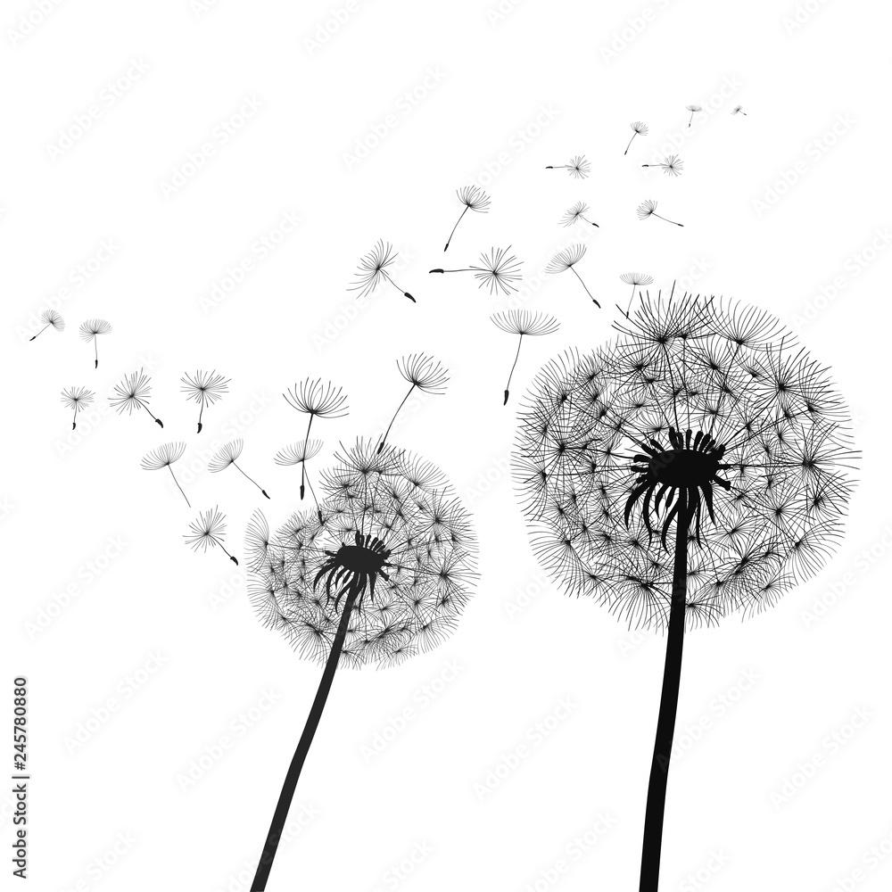 Fototapety, obrazy: Abstract black dandelion, dandelion with flying seeds illustration - stock vector