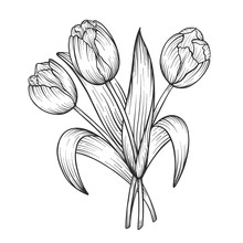 Hand Drawn And Sketch Tulips Flower Bouquet. Black And White With Line Art Vector Illustration. Floral Botanical Flower.