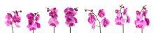 Set Of Beautiful Purple Orchid Phalaenopsis Flowers On White Background
