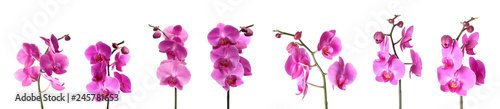 Set of beautiful purple orchid phalaenopsis flowers on white background