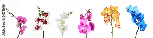 obraz lub plakat Set of beautiful colorful orchid phalaenopsis flowers on white background