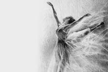 Ballerina In The Jump. Sketch....