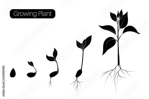 Plant growth phases infographic Tapéta, Fotótapéta