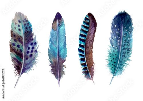 Hand drawn watercolour bird feathers vibrant boho style bright illustration Poster Mural XXL