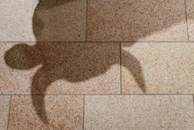 Shadow Of Bull Statue On Texture Tiles Floor Metaphor Of Bull Market Is Coming For Stock Market Or Investment Asset