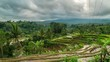 Jatiluwih Rice Terraces in Bali Indonesia