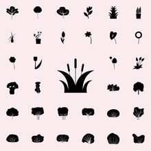 Bulrush Icon. Plants Icons Universal Set For Web And Mobile