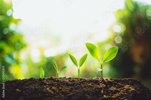 Close-Up Of Fresh Green Plant Growing,Tree Growth Steps In nature And beautiful morning lighting