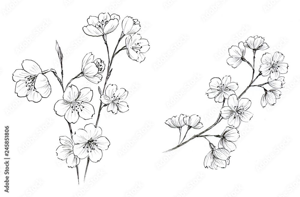 Fototapety, obrazy: 桜 ペン画