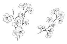 桜 ペン画