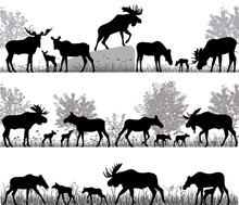 Silhouettes Of Mooses Also Nam...