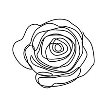 Flower Continuous One Line Art Drawing Vector Illustration. Awesome Rose Isolated On White Background.