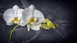 Branch with white orchid flowers on black marble