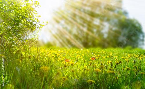 idylliczna-laka-kwiatowa