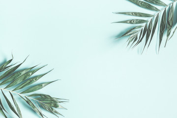Tropical palm leaves on pastel mint background. Summer concept. Flat lay, top view, copy space