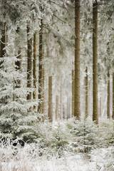 Panel Szklany Zima Blick in den verschneiten Fichtenwald auf dem Meißner