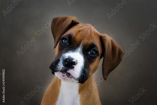 Foto  jeune boxer en gros plan