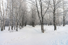 Snowy Tunnel Among Tree Branch...