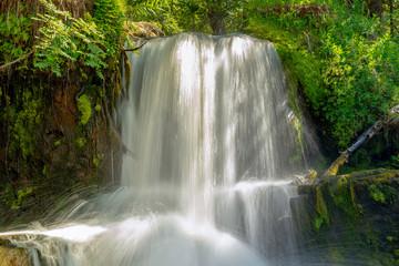 Fototapeta Wodospad Small waterfall in the green forest