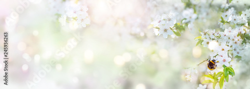 Spring scenery with cherry blossoms