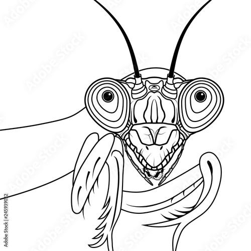 Portrait Of Green Praying Mantis Vector Illustration Tattoo T