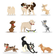 Dog Set. Collection Of Pet Doi...