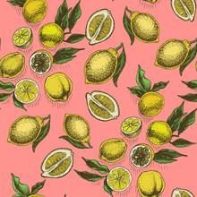 Vector Sketch Background Fruit. Citrus - Bergamot, Lemon, Orange, Lime, Tangerine, Tangelo, Grapefruit.