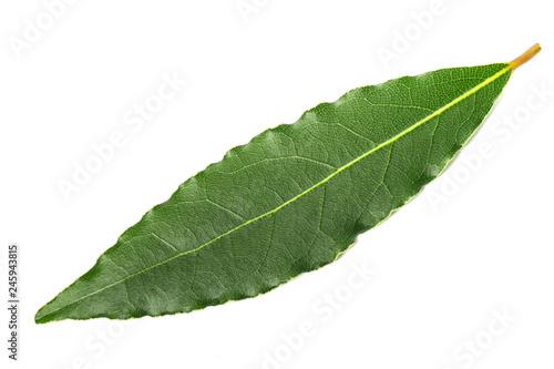 Staande foto Kruiderij laurel leaf