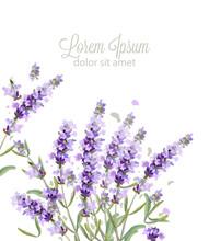 Lavender Card Watercolor Vecto...