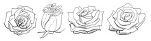 Roses Isolated On White Background. Set Of Elements. Black And White. Vector Illustration EPS 10 File