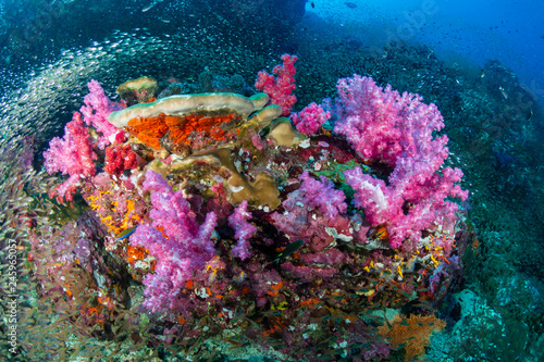 Fototapety, obrazy: A vibrant, colorful tropical coral reef in the Andaman Sea