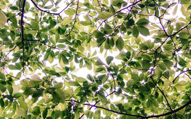 Naklejkatree leaves