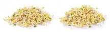 Bean Sprouts, Soybean Sprouts On White Background