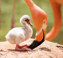 Under The Beak